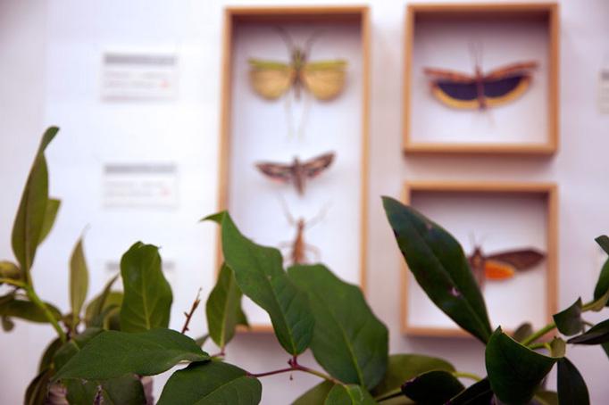 Grasshopper Cafe