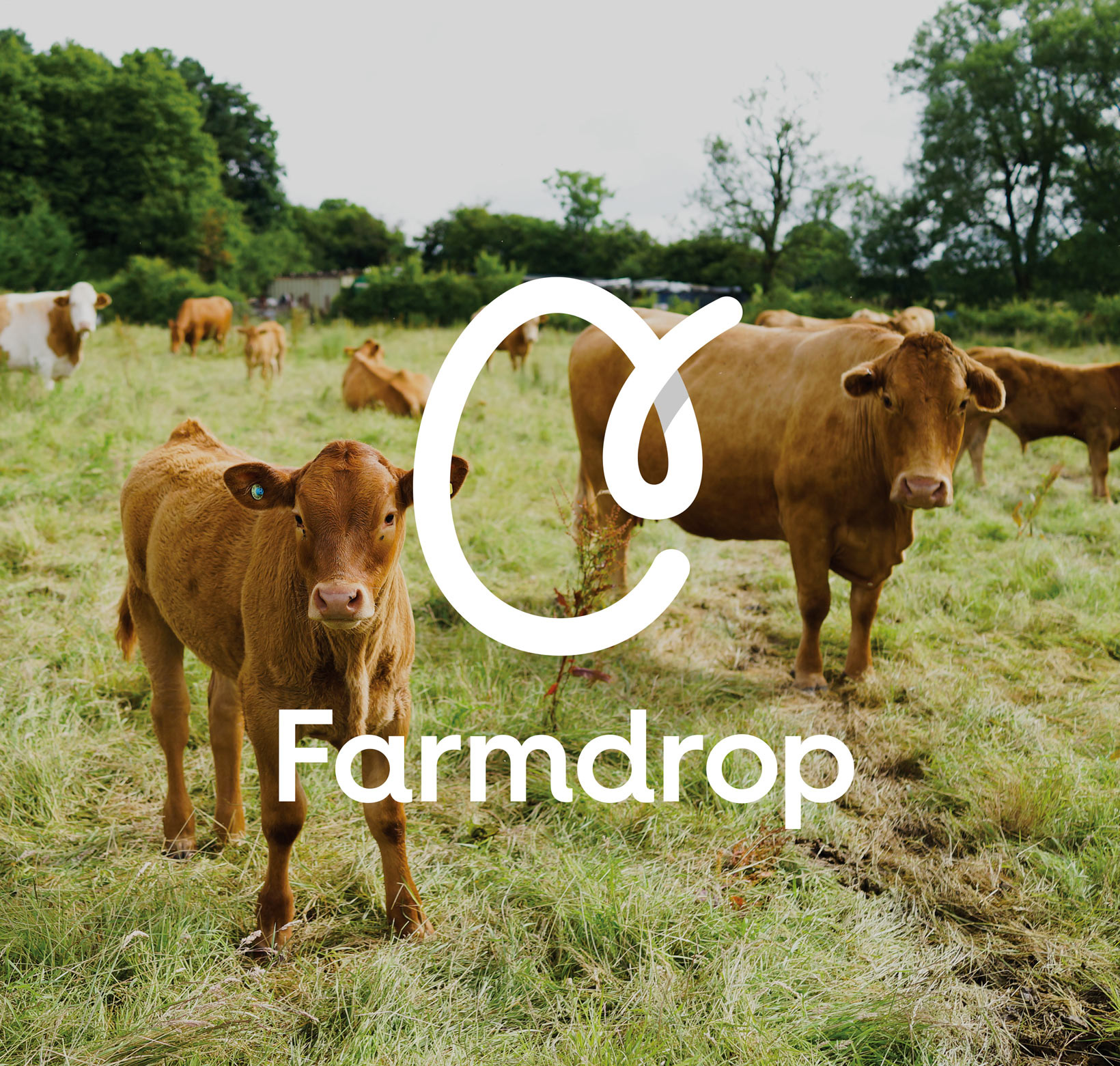 New Logo and Identity for Farmdrop by Confederation Studio and In-house