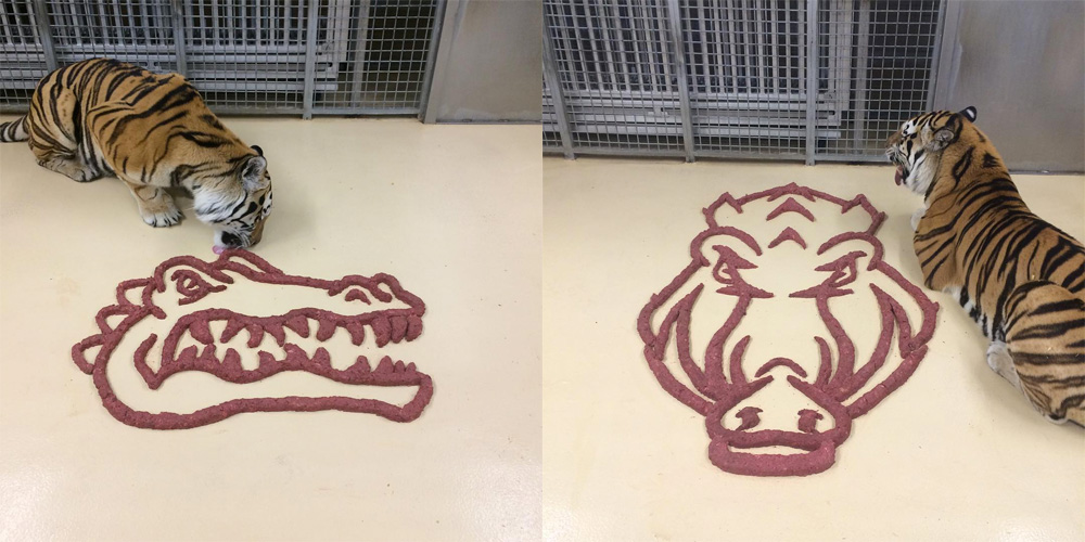Meat Logos for Mike VI