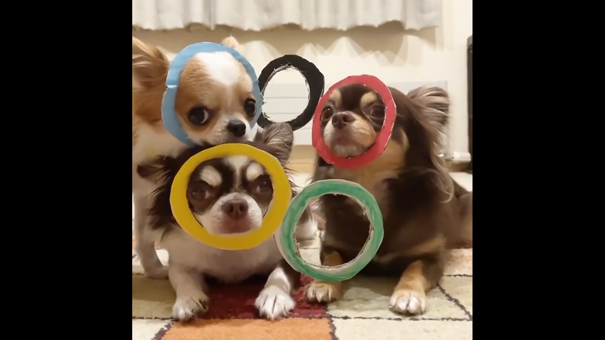 Olympic Snoots