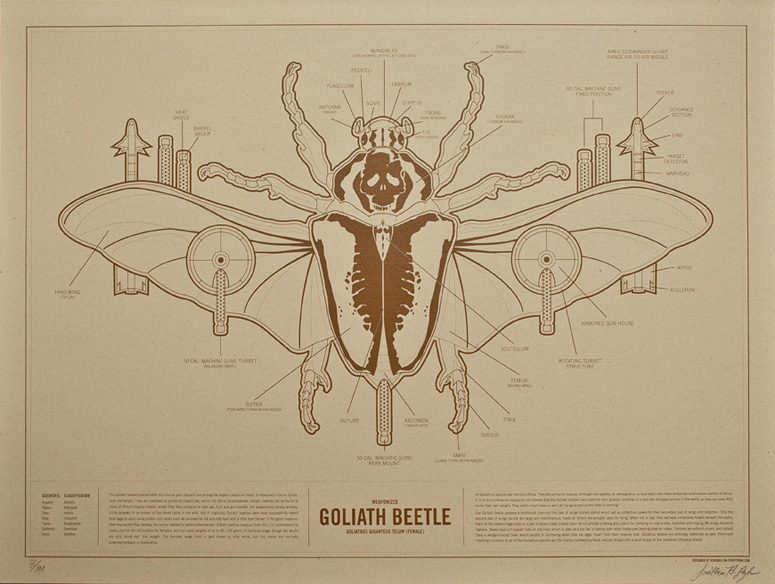 Goliath Beetle by Jonathan Bybee